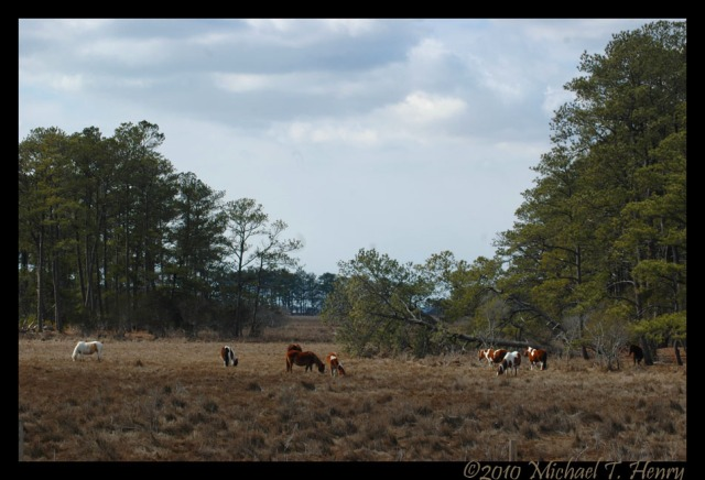 Wild ponies and some downed trees