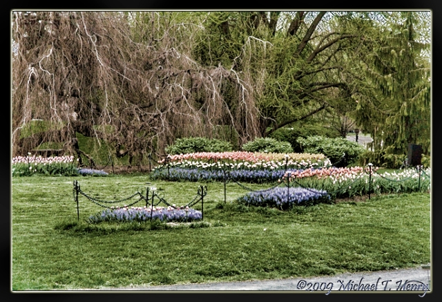 Tulipfest at Washington Park