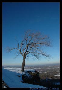 A lonely tree overhangs the steep drop from the overlook area